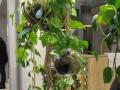 Große, grüne Zimmerpflanzen, die von Decken und Wänden herunterhängen, sich auf Sideboards oder Teppichen herum lümmeln setzten dieses Jahr auf der Ambiente 2017 Akzente.